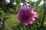 Gift for Katherine's Garden