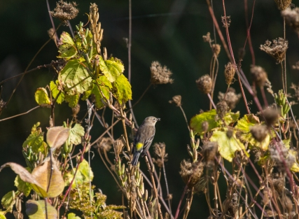 Unidentied Bird