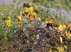 Unidentified Brown Bird
