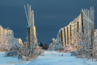 SC1-Icy Trellises-Scapes Entry2