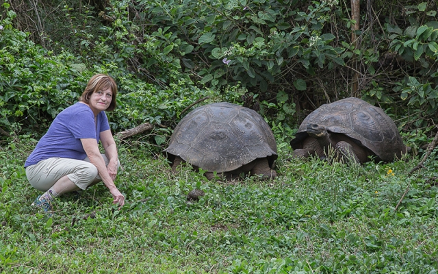 Jane and Tortoises Small
