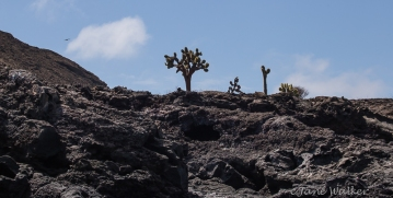 A Few Cacti